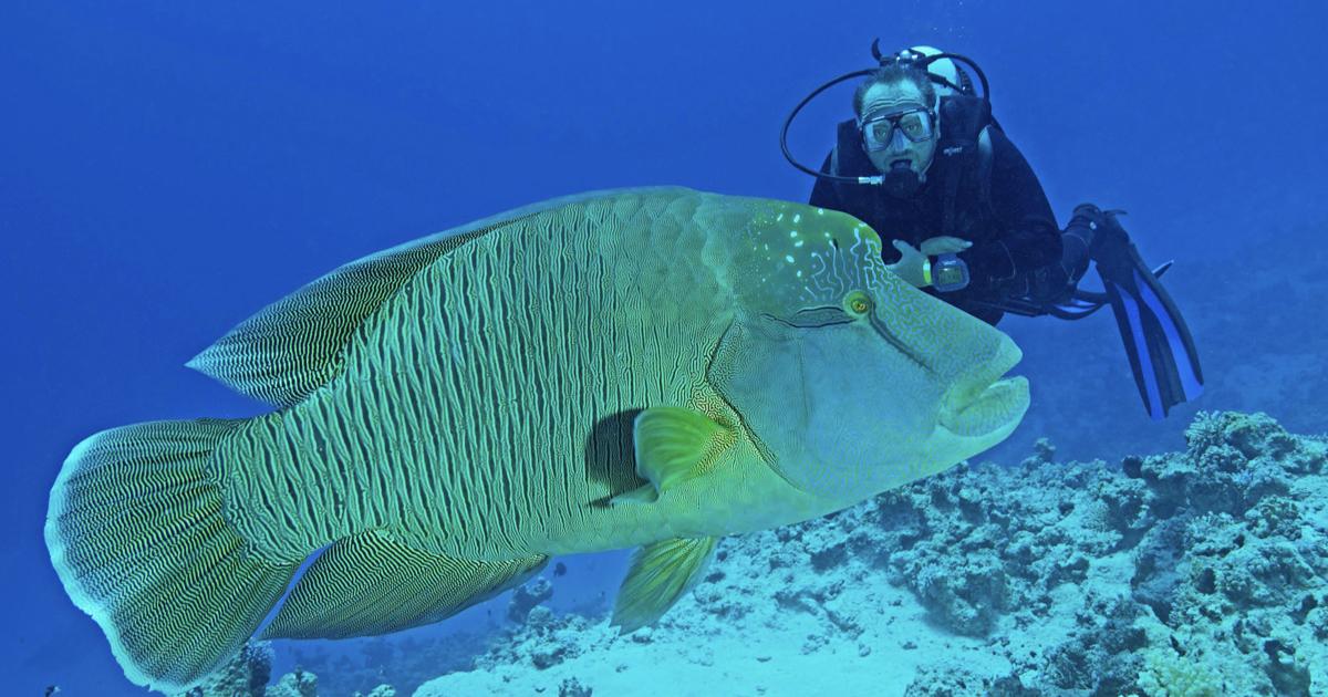Manihi, la prima pass oceanica non si scorda mai